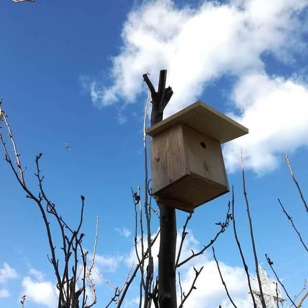 birdhouse_00.jpg