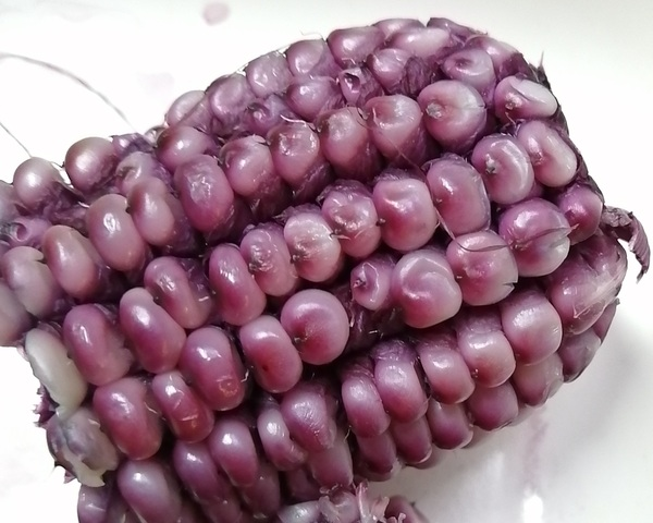 corn_purple_08.jpg