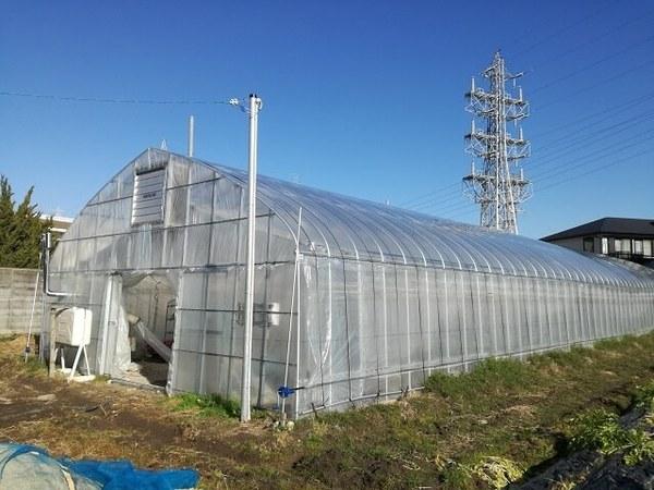 greenhouse_00.jpg