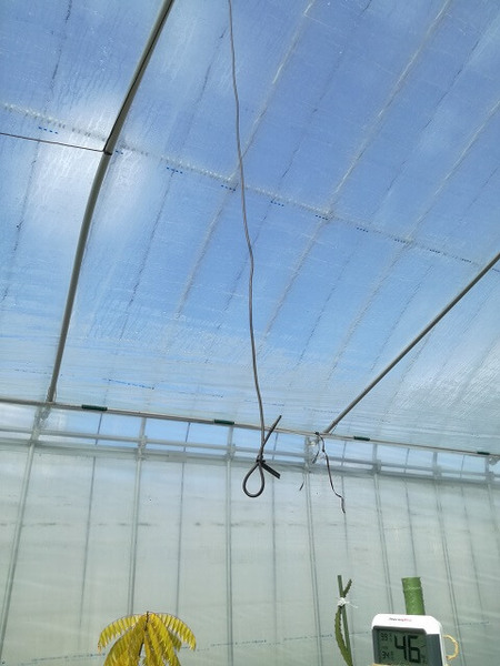 greenhouse_04.jpg