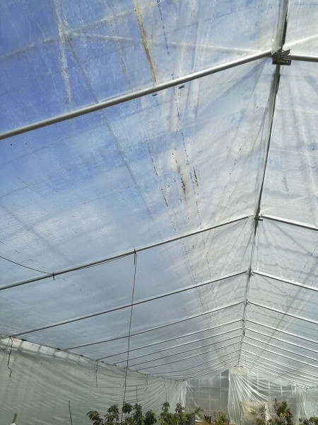 greenhouse_06.jpg