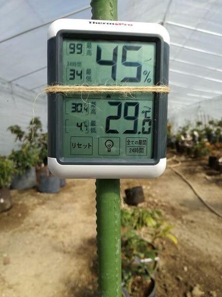 greenhouse_07.jpg
