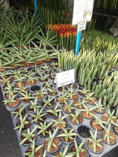 plants_thailand_003.jpg