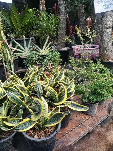 plants_thailand_004.jpg