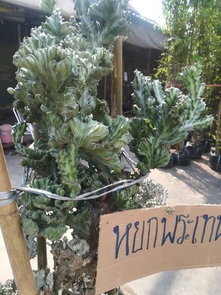 plants_thailand_006.jpg
