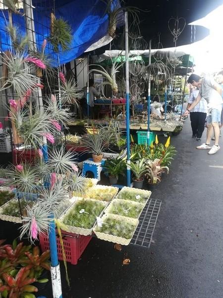 plants_thailand_008.jpg