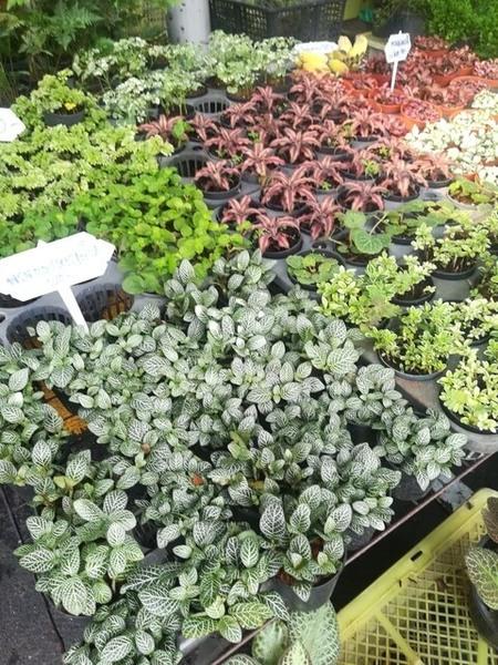 plants_thailand_009.jpg