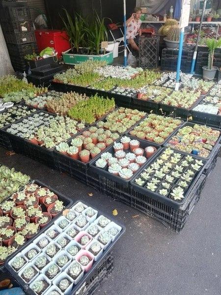 plants_thailand_011.jpg
