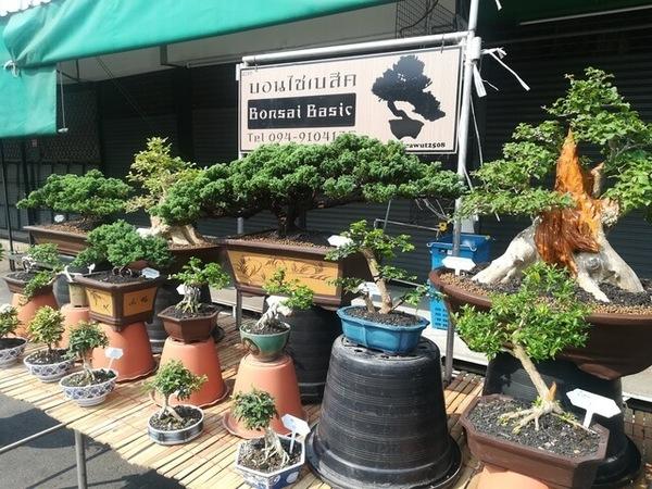 plants_thailand_012.jpg