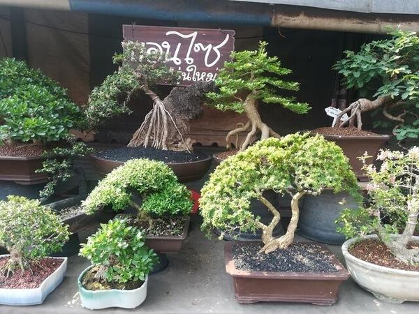 plants_thailand_013.jpg