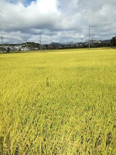 rice_2019_01.jpg