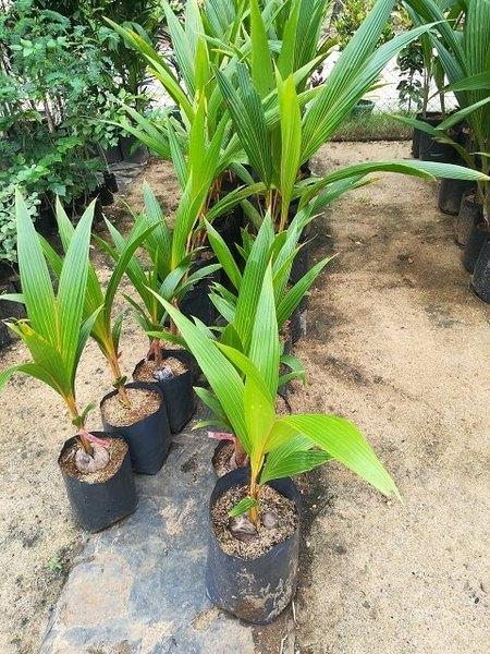 srilanka_fruits_08.jpg