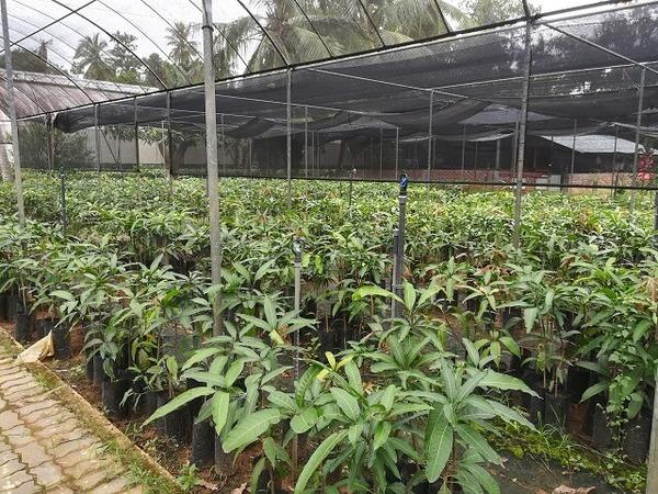 srilanka_fruits_09.jpg