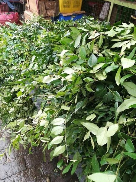 srilanka_herb_02.jpg