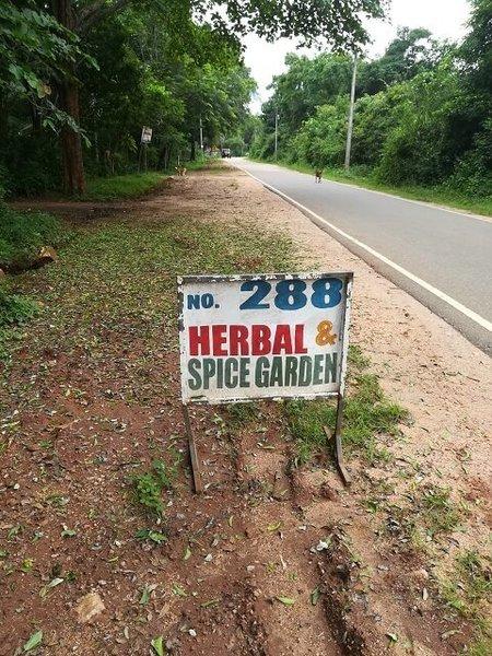 srilanka_herb_04.jpg
