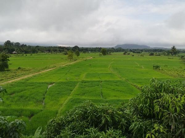 srilanka_rice_01.jpg