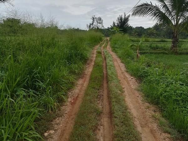 srilanka_rice_05.jpg