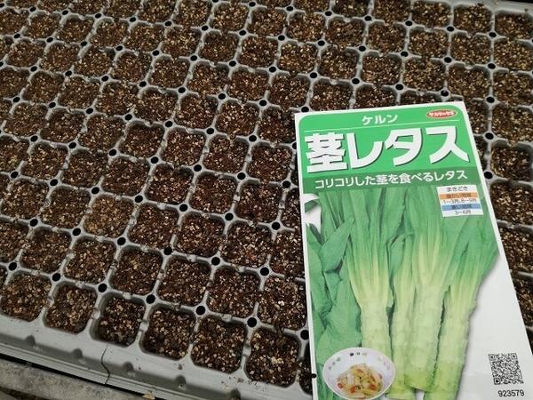 stem_lettuce_01.jpg