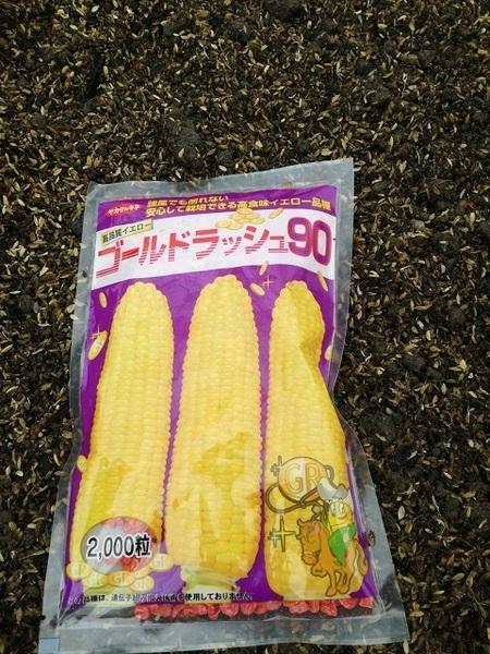 sweet_corn_008.jpg