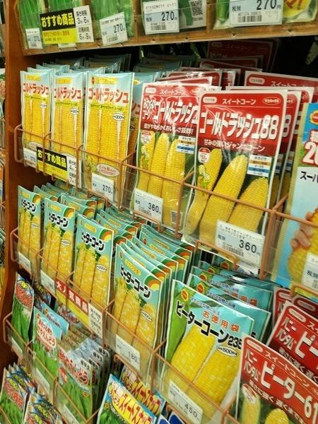 sweet_corn_009.jpg
