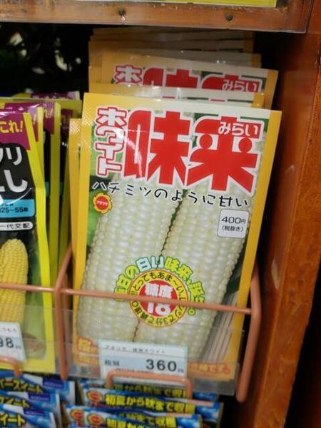 sweet_corn_011.jpg