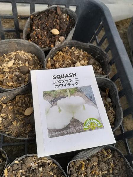 zucchini_001.jpg