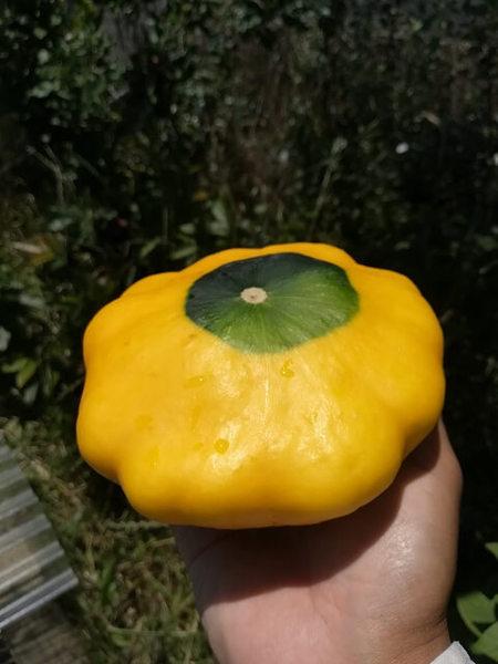 zucchini_005.jpg