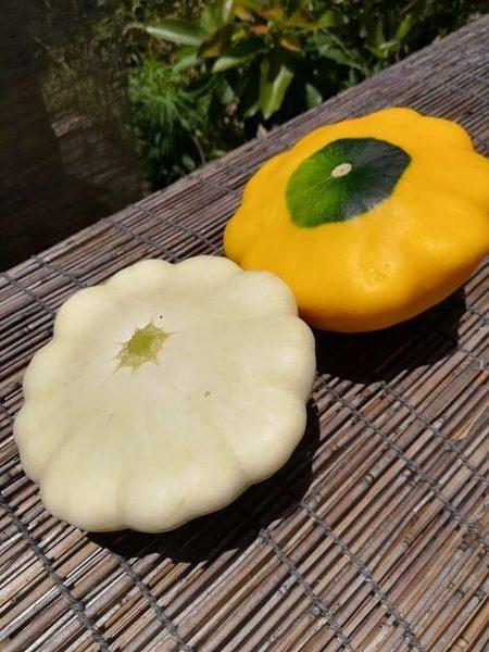 zucchini_006.jpg